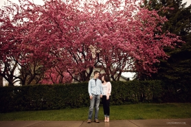 Blossoming Trees | Spring Engagement | Calgary Wedding Photographer | Carlin Anquist Photography