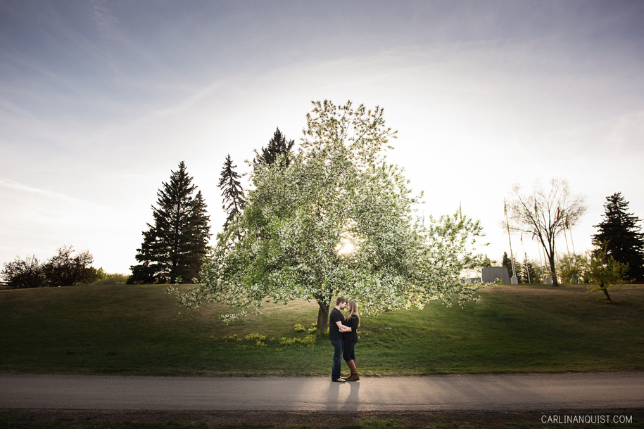 Calgary Engagement Photographer | May Day Trees | Sunset